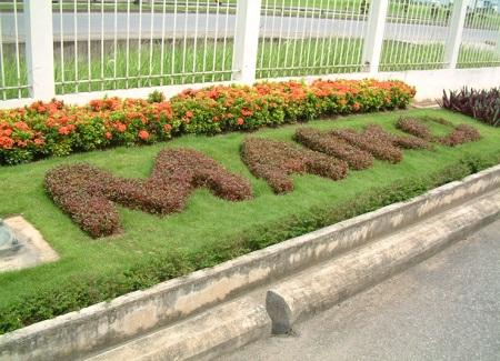 Trồng và chăm sóc cây cỏ Công ty MAIKO Hải Phòng